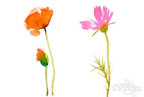 好照片教你打造清新花卉攝影作品 教程